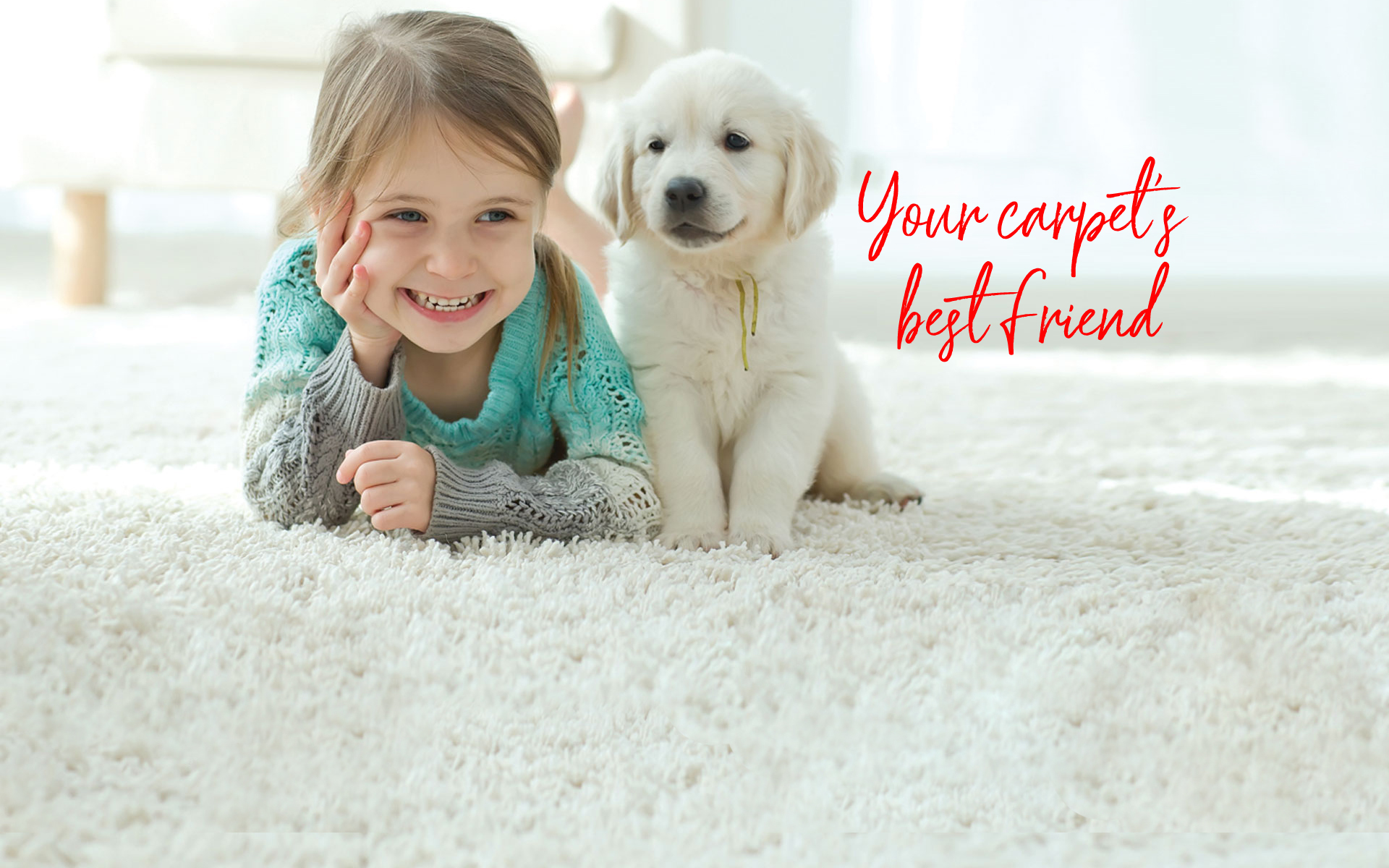 Your carpet's best friend